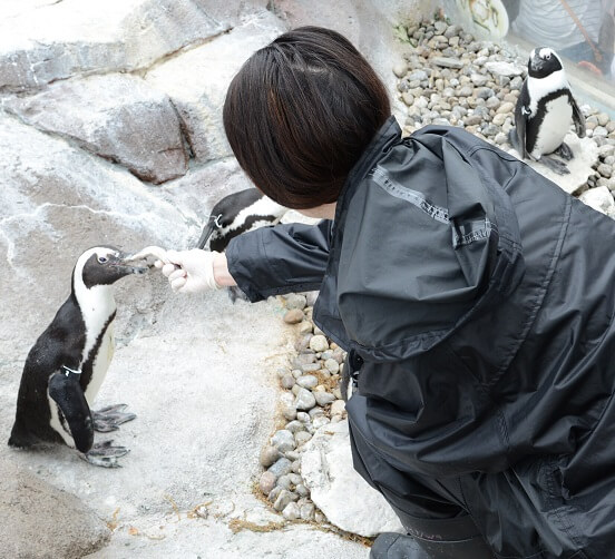 Woman feeding a penguin
