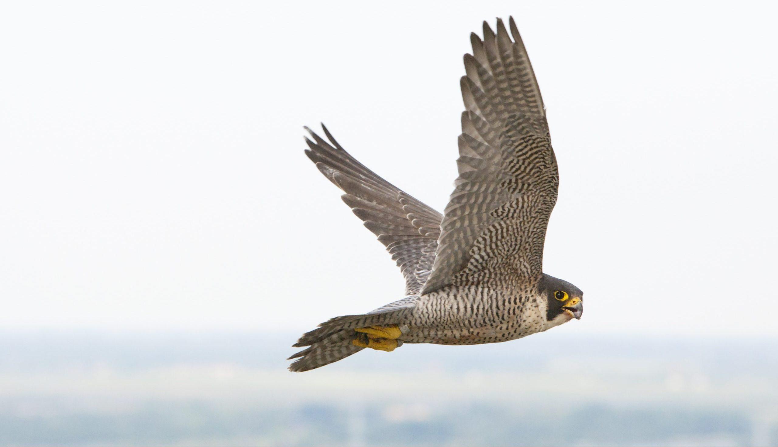 Live Streams | National Aviary