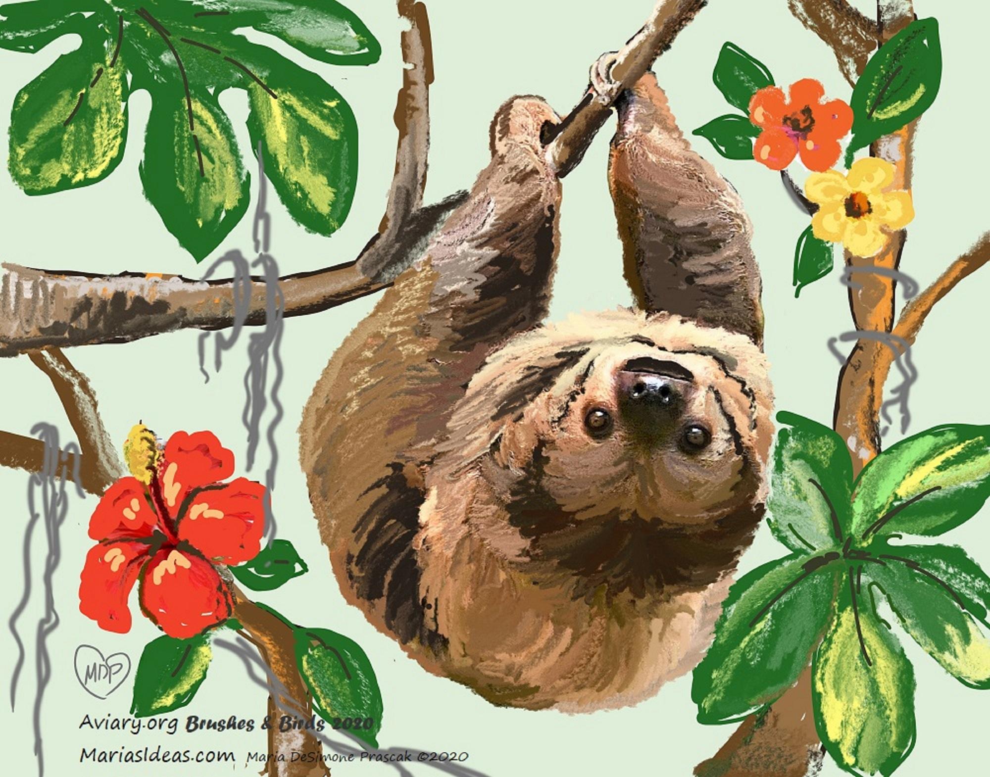 Painting of a Linnaeus's Two-toed Sloth by Maria DeSimone Pracsak