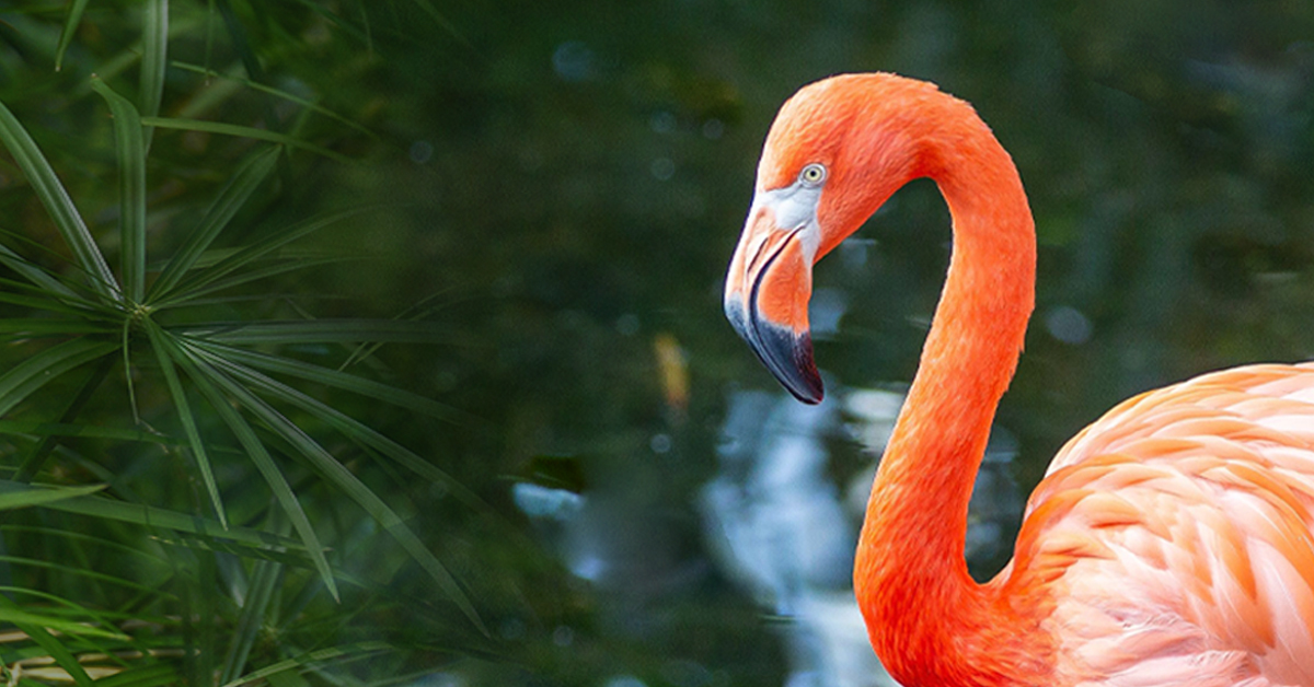 Flamingo standing in water with greenery