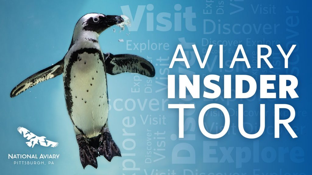 Aviary Insider Tour Cover Photo with Penguin and Logo